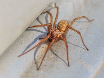 spiders_pest_control_Langley