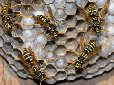 wasp_control_Surrey